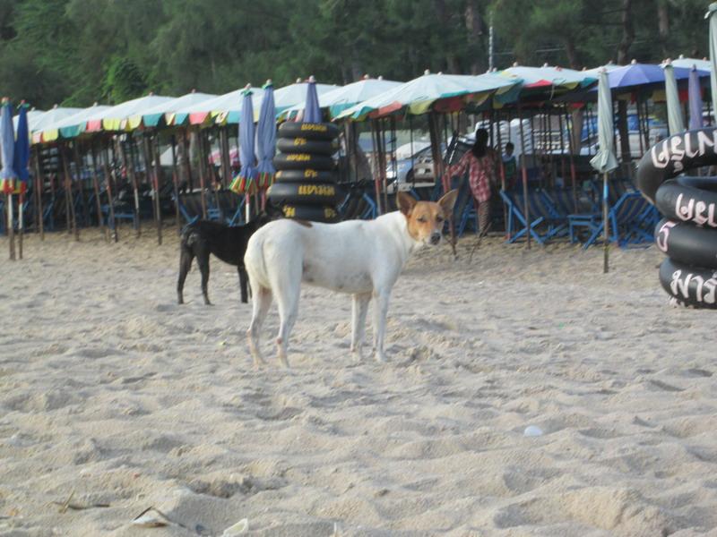 Urlaub Thailand 2014 - Seite 3 6o9pah7l