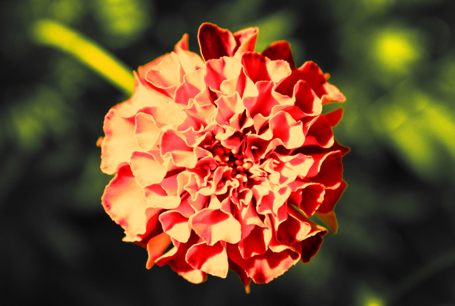 http://fs1.directupload.net/images/150405/jfmfk5qy.jpg