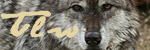 The Loner Wolf Urptnri8