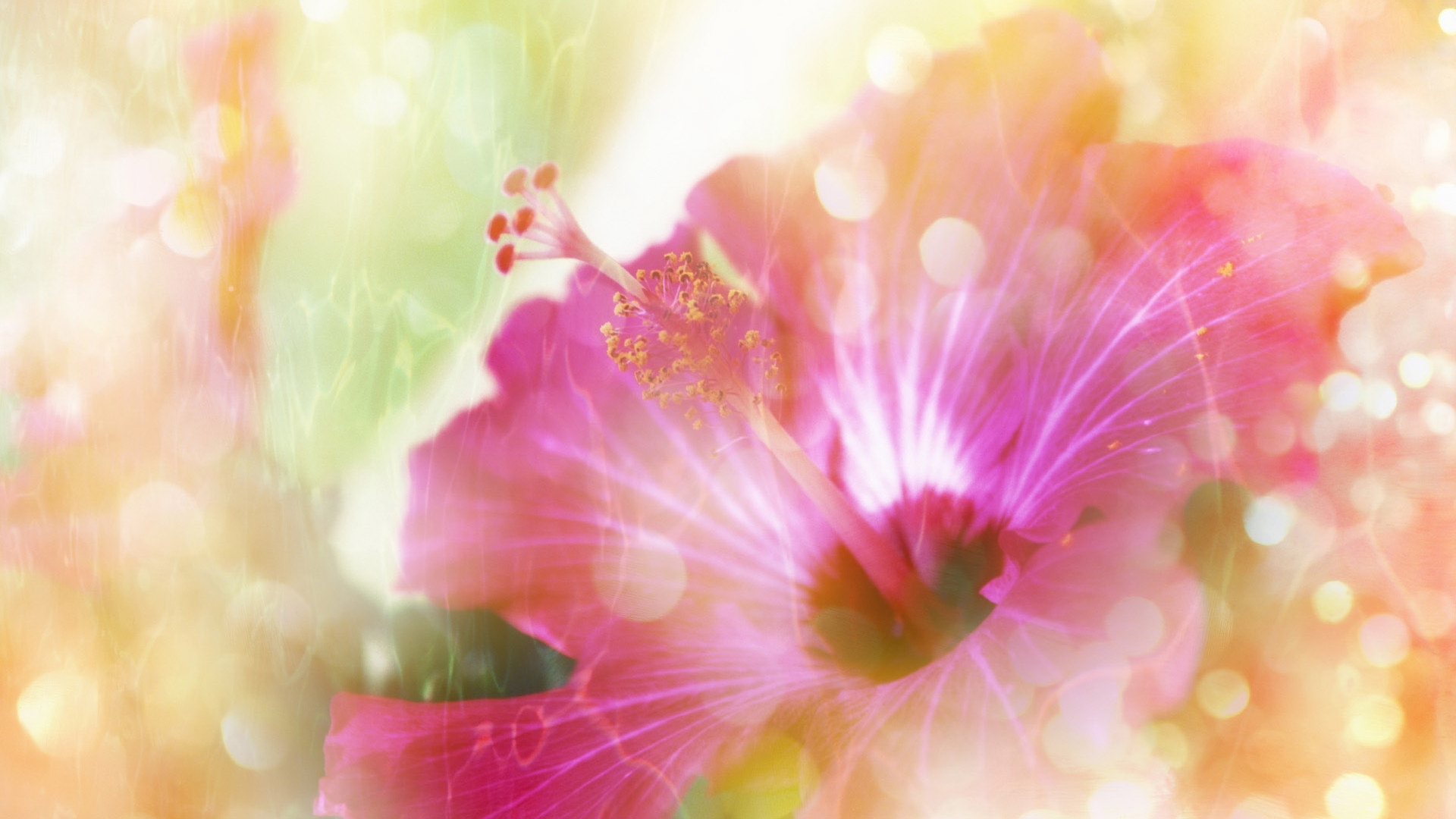 http://fs1.directupload.net/images/150705/2gle6lpo.jpg