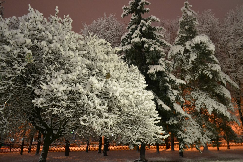 Первый снег выпал ночью. Фото отчет