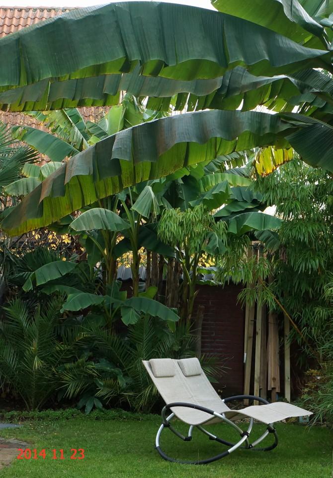 Winterharte exoten im heimischen garten seite 30 for Gartengestaltung coesfeld
