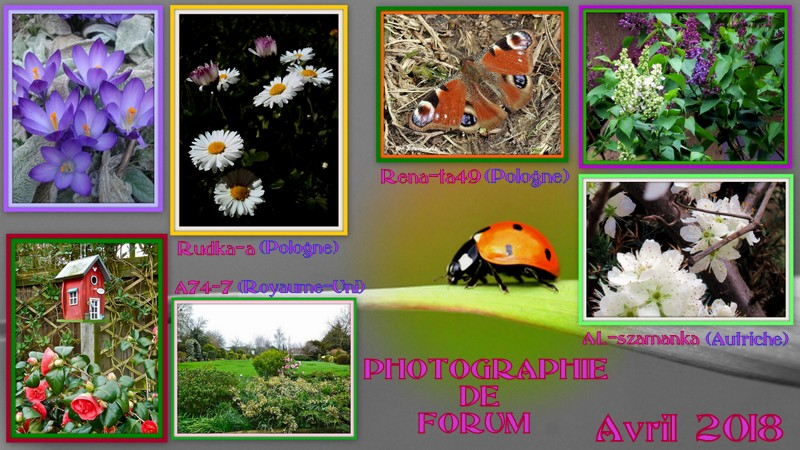 http://fs1.directupload.net/images/user/180417/j8q4ho9q.jpg