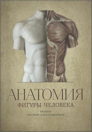 Анатомия фигуры человека: краткое пособие для художников
